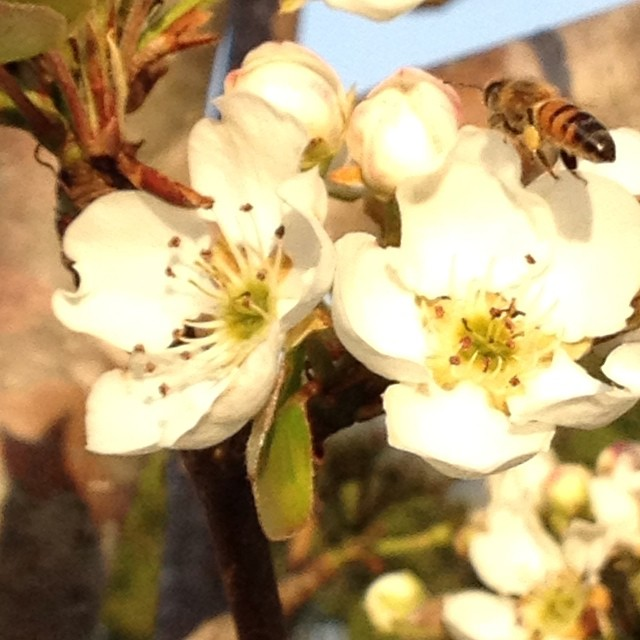 Bring on Spring! Busy little bees, buzzing round the flowers…